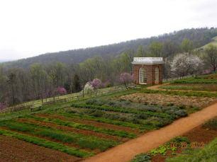 TJ's Garden